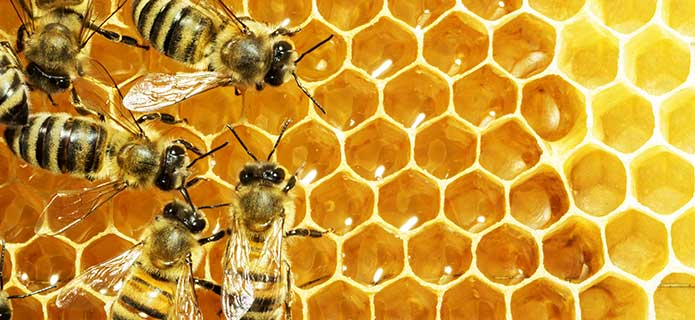 apitoxin-bees