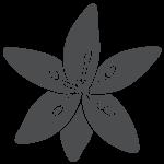 bioskinup-contour-grey