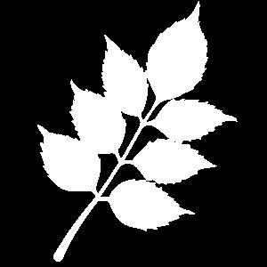 capt-system-es-m-white
