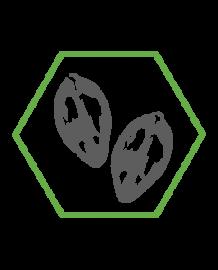 PhytoCellTec™ Argan